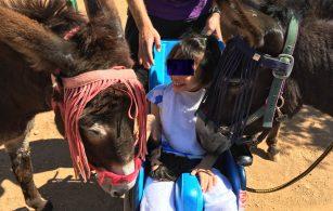 Θεραπευτική με γαϊδουράκια (donkey assisted therapy)