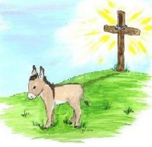 DonkeyCrossnewest